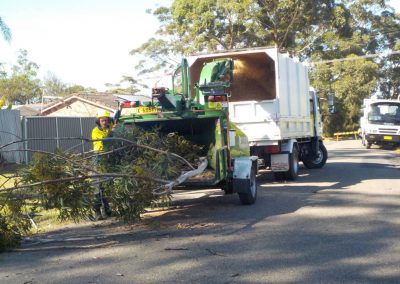 tree-removals19