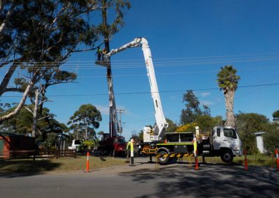 tree-removals20