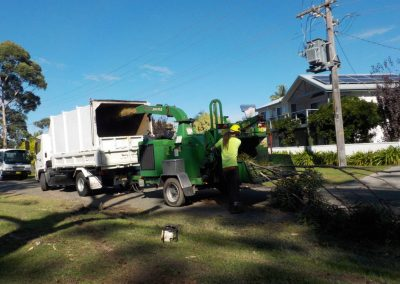 tree-removals21