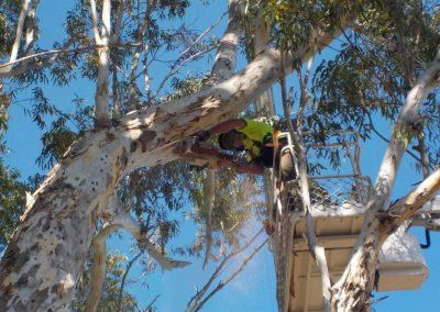 tree-removals22